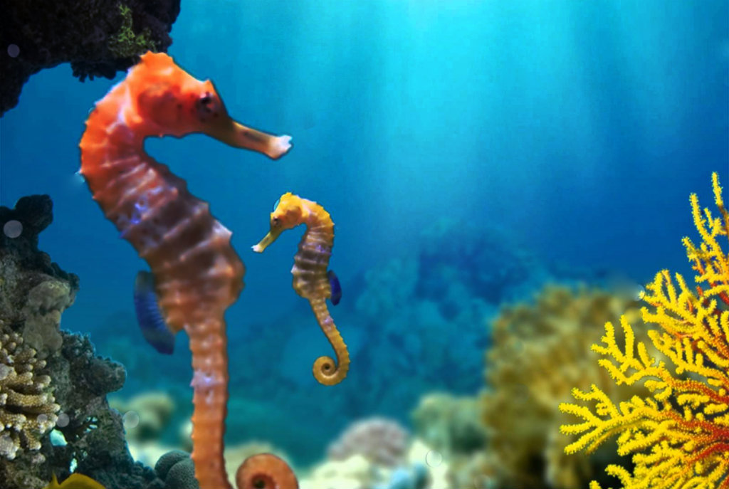 Seahorse conservation in Ibiza